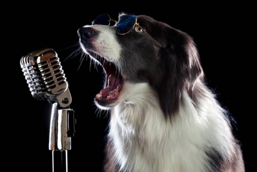 Background Music Tracks for Singers and Karaoke Aficionados